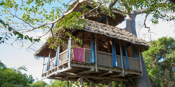 Chole Mjini Tree Houses
